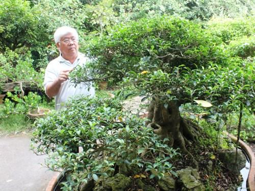 Tỉ phú nông dân Sài Gòn: Đưa hoa kiểng ra nước ngoài