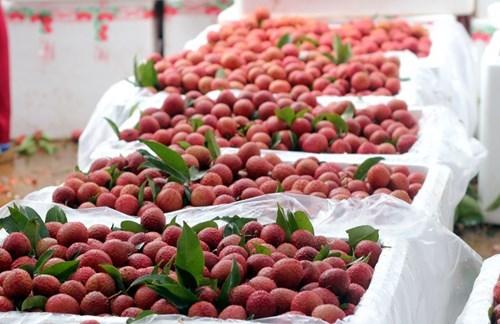 'TPP là liều thuốc thử cho ngành nông nghiệp Việt Nam'