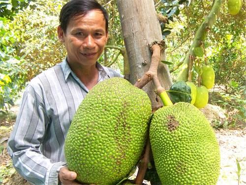 Những tỉ phú nông dân: Làm giàu từ 10 cây mít