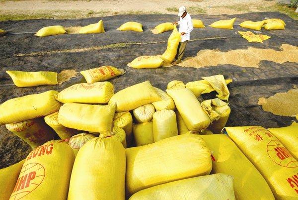 Cuộc đua bán gạo cho Philippines