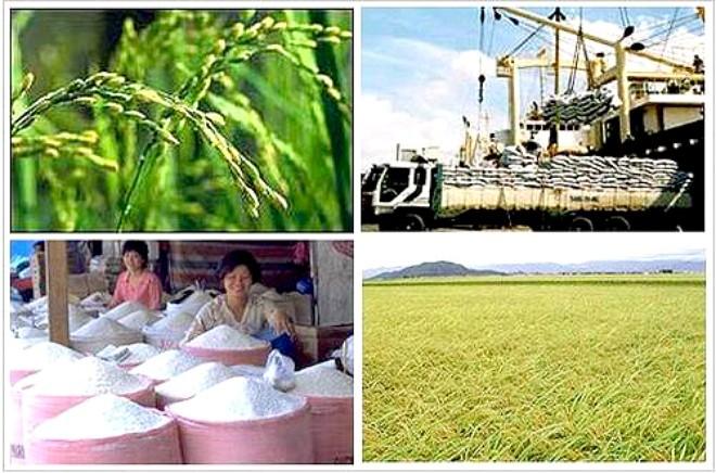 Gạo Việt đang bị tẩy chay tại Mỹ?